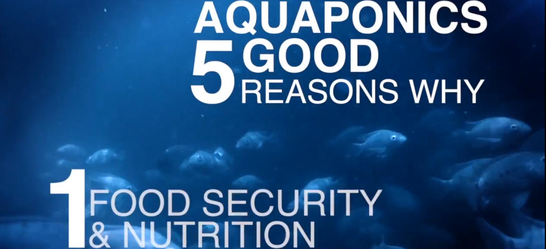 5 Good Reasons for Aquaponics: Reason 1—Food Security
