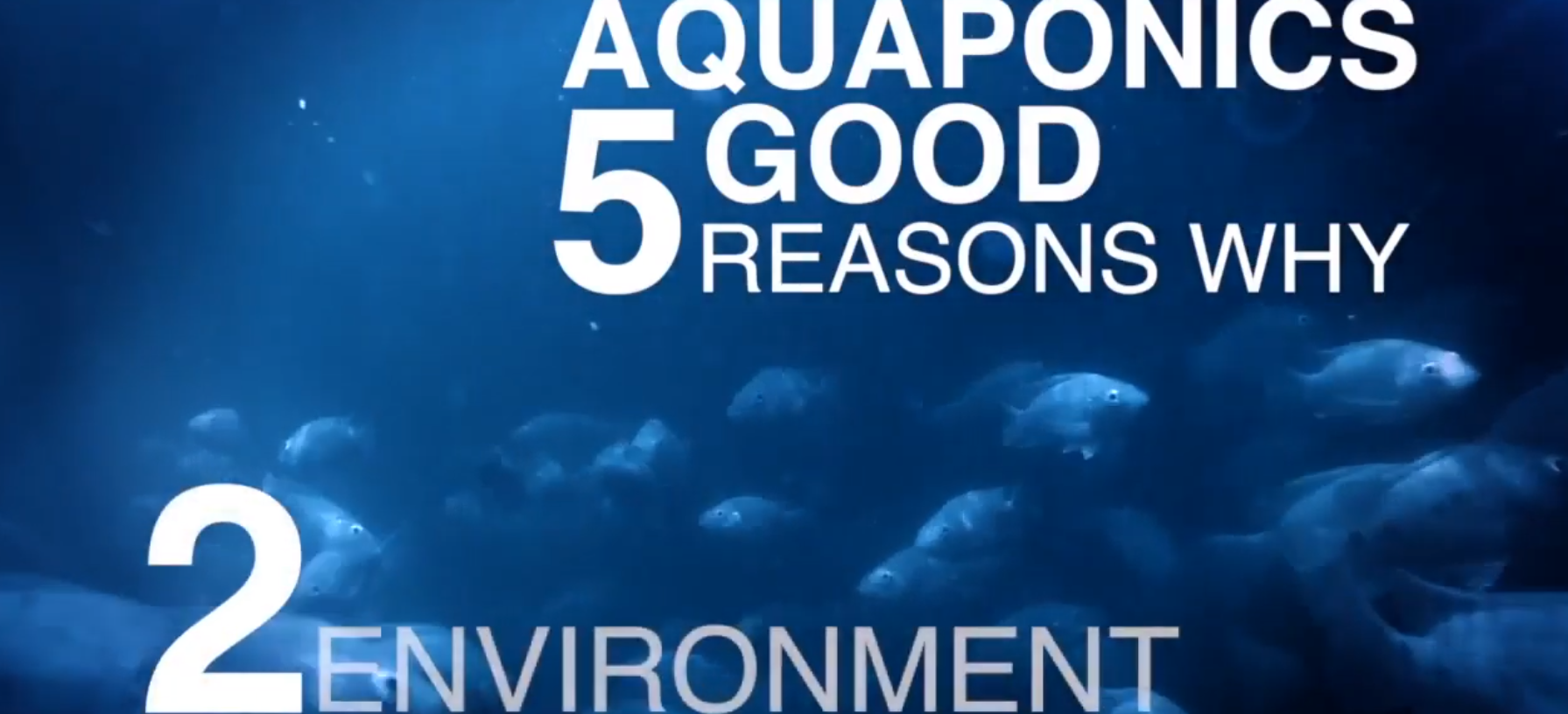 5 Good Reasons for Aquaponics: Reason 2 – Optimized Use of Natural Resources