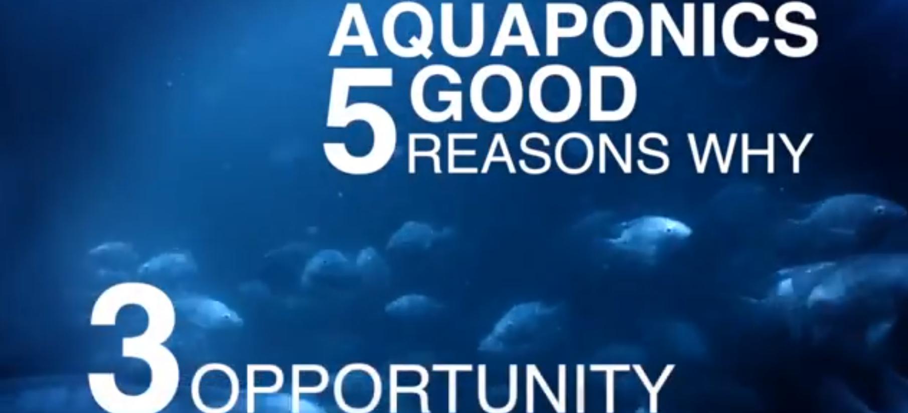 5 Good Reasons for Aquaponics: Reason 3–Economic Opportunity