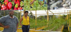 Economic Development Through Aquaponics in Jamaica
