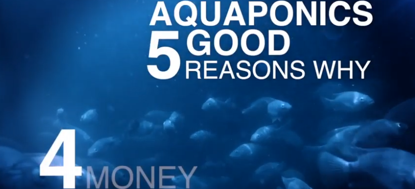 5 Good Reasons for Aquaponics: Reason 4 – Money