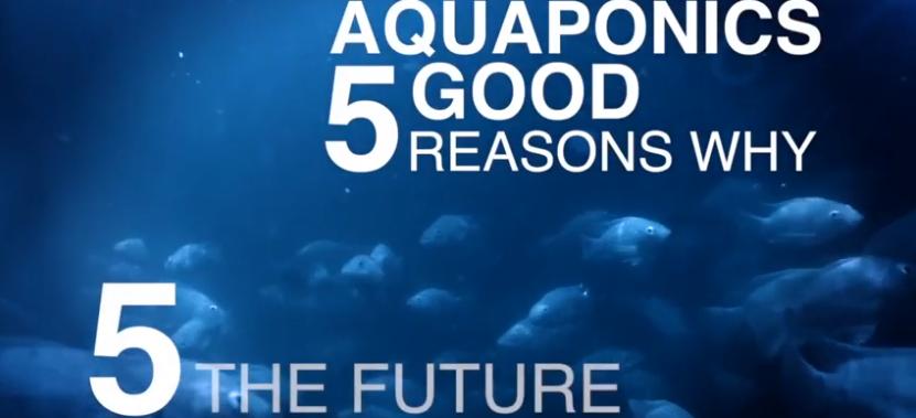 5 Good Reasons for Aquaponics: Reason 5—The Future